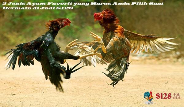 3 Jenis Ayam Favorit yang Harus Anda Pilih Saat Bermain di Judi S128